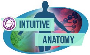intutive-anatomy